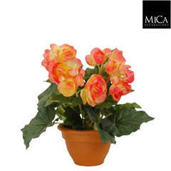 Begonia en pot Ø 11,5 cm, saumon Ø 20 x H. 25 cm