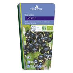 Caseille 'Josta' bio : pot de 3 litres