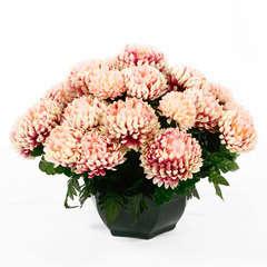 Coupe de chrysanthèmes artificiels, 28 fleurs - Rose