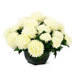 Coupe de chrysanthèmes artificiels, 28 fleurs- Blanc