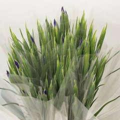 Botte de 7 iris 'Bleu magic'