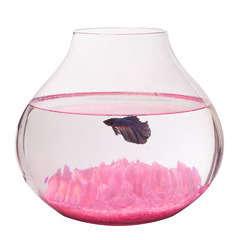 Aquarium Casta poisson d'eau froide, transparent - 13 litres
