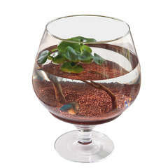 Aquarium  Aquael poisson d'eau froide, transparent - 10 litres