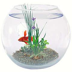 Boule aquarium en verre : équipée, 25 cm de diamètre