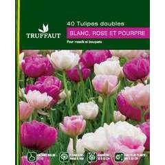 Bulbes de tulipes doubles blancs, rose et pourpres - x40