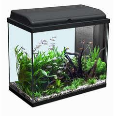 Aquarium Iban, noir - 93 litres