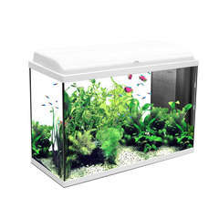 Aquarium Iban, blanc - 124 litres