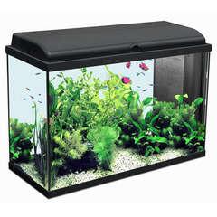 Aquarium Iban, noir - 124 litres