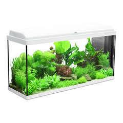 Aquarium Iban, blanc - 156 litres