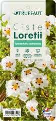 Cistus x loretti : ctr 3 litres
