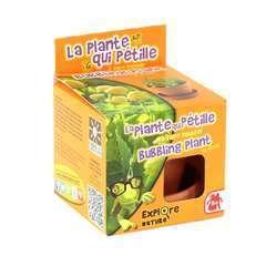 Pot 8 cm plante qui pétille