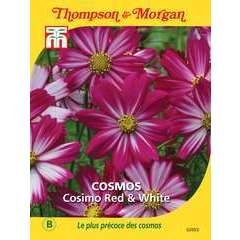 Cosmos Cosimo Red and White
