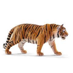 Tigre du Bengale mâle