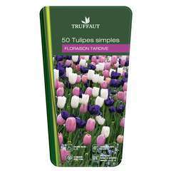 Bulbes de tulipes simples tardive - x50