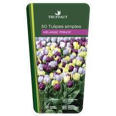 Bulbes de tulipes simples 'Prince' - x50