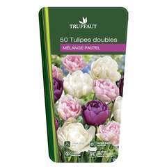 Bulbes de tulipes double pastel - x50