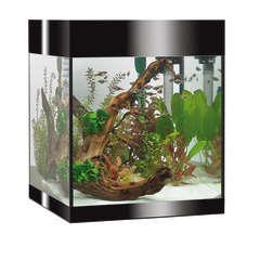 Aquarium Askoll Pure LED, noir - 53 litres