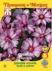 Cosmos Capriola sachet 30 graines