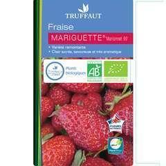 Plants de fraisiers 'Mariguette' bio : barquette 4 plants