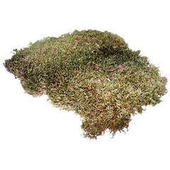 Mousse naturelle pour terrarium