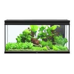 Aquarium Elégance Expert poisson d'eau douce, noir - 293 litres