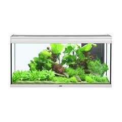 Aquarium Elégance Expert poisson d'eau douce, inox - 293 litres