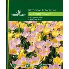 Bulbes de tulipes botaniques mix - x50