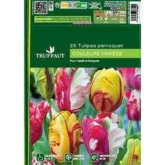 Bulbes de tulipes perroquets mix - x25