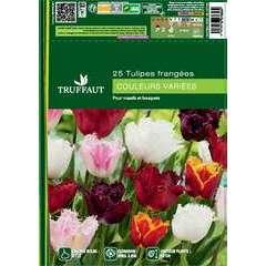 Bulbes de tulipes dentelle mix - x25