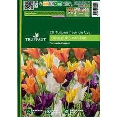 Bulbes de tulipes Fleurs de Lys mix - x25