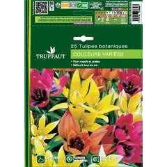 Bulbes de tulipes botaniques mix - x25