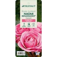 Rosier buisson 'Naomi Renaissance®' (Poulren022) : pot de 5 litres