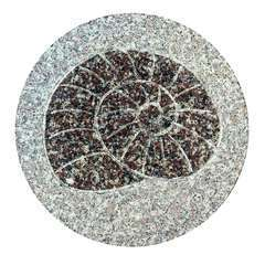 Pas de jardin fossile, en granit Ø 30 cm - Escargot