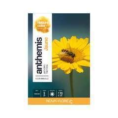 Anthemis tinctoria jaune : boite