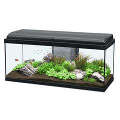 Aquarium Aquadream LED poisson d'eau douce, noir - 135 litres
