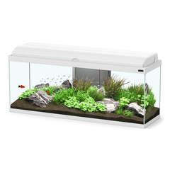 Aquarium Aquadream LED poisson d'eau douce, blanc - 135 litres