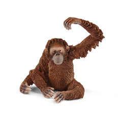 Orang-outan, femelle