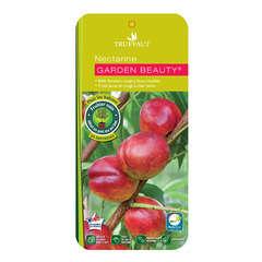 Nectarinier nain 'Garden baby'® : C.10L