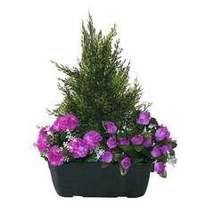 Jardinière de cyprès/œillets/mini roses assortis, 25xH40cm (1,5kg)
