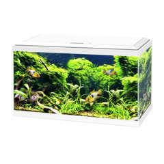 Aquarium Ciano - 54 litres