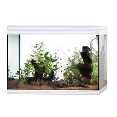 Aquarium Askoll Pure LED poisson d'eau douce, blanc - 156 litres