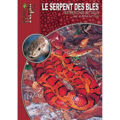 Guide de la terrariophilie : le serpent des blés
