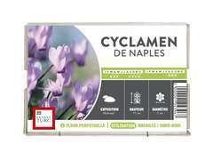 Bulbe de cyclamens de Naples 'Rose' - x1