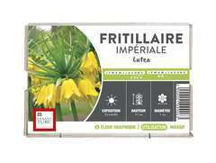 Bulbe de fritilaire imperiale 'Lutea' - x1