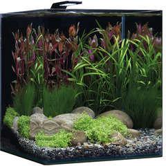 Aquarium Nano Cube Basic, transparent - 60 litres