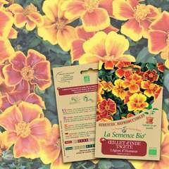 Graines de fleurs Œillet d'Inde Tagète Légion d'Honneur Bio