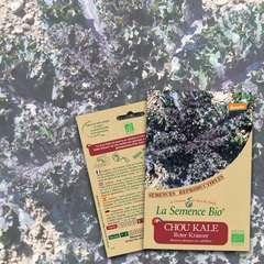 Graines potagères Chou Kale Roter Krauser Bio