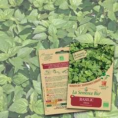 Graines potagères Basilic citron Bio