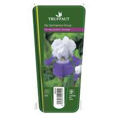Iris des jardinsArpège:lot de 3 godets