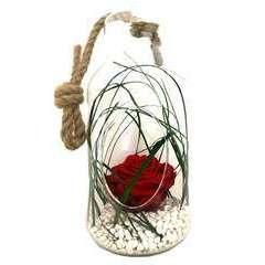 Verrine bottle S